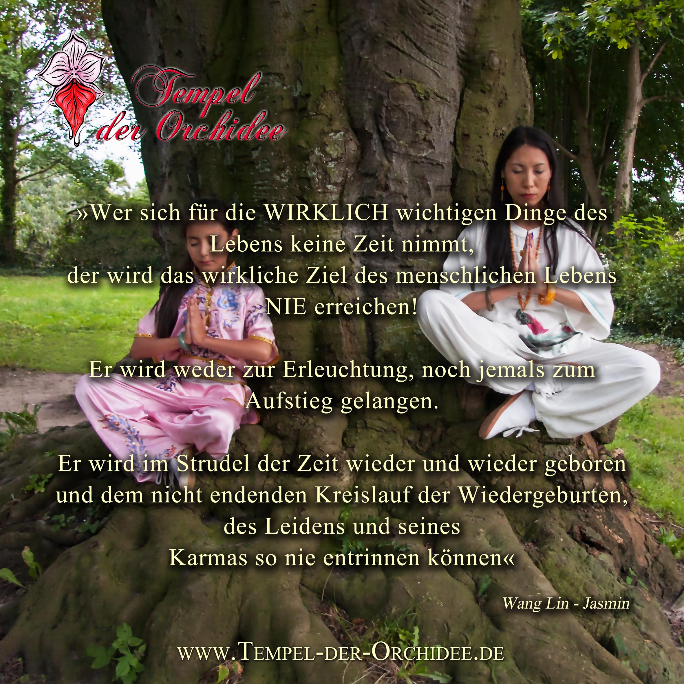 DAO-Massagen – eine wirkungsvolle Karma-Arbeit – Roter Lotos